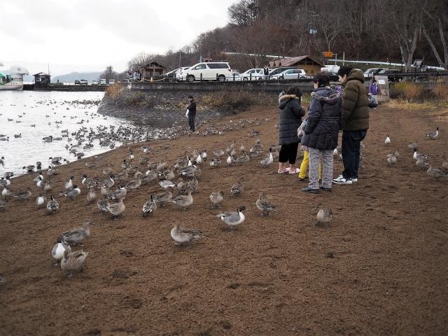 猪苗代湖_29