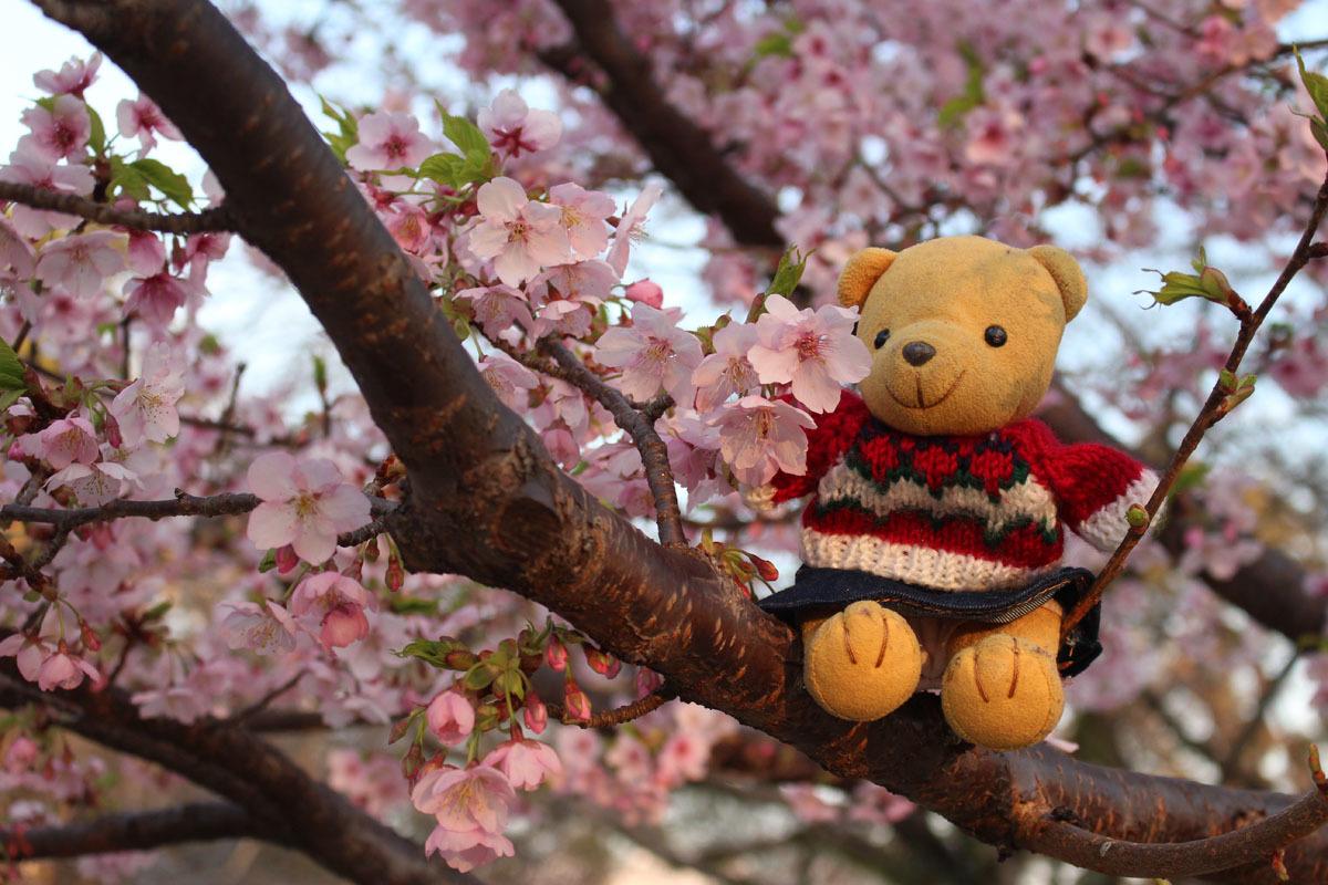 伊東小室桜の枝でa 190217