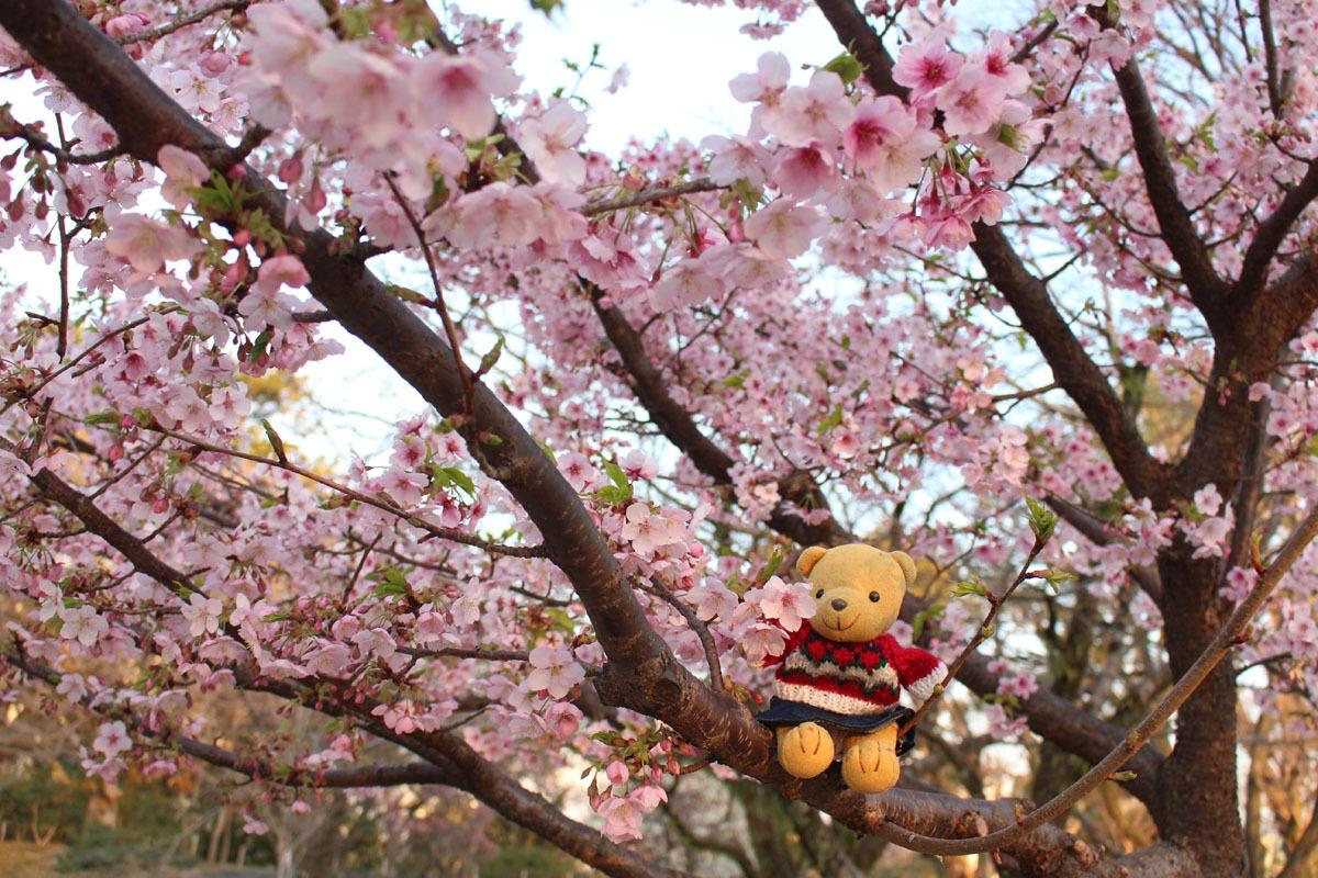 伊東小室桜の枝にb 190217