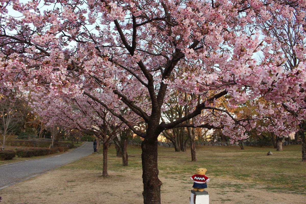 伊東小室桜を見上げる2 150217