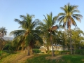 ホテルの朝の風景