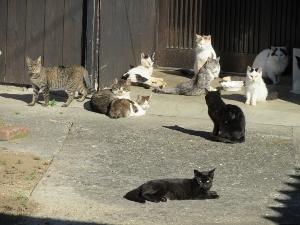 玄関先にたむろする猫たち