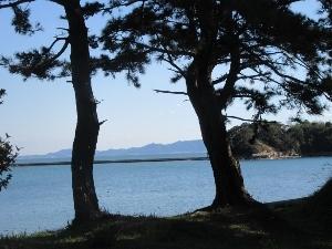 松越しに海が広がる風景
