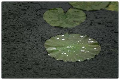 モネの庭、雨の日 4