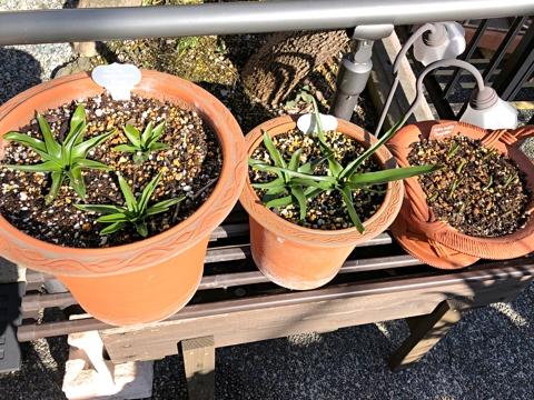 gardening444