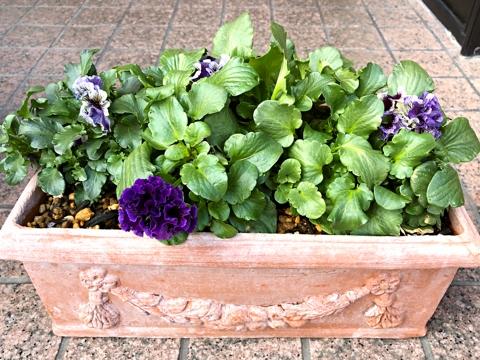 gardening446