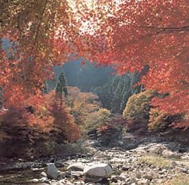 奥津渓谷紅葉