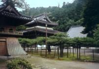 佛通寺の松と伽藍