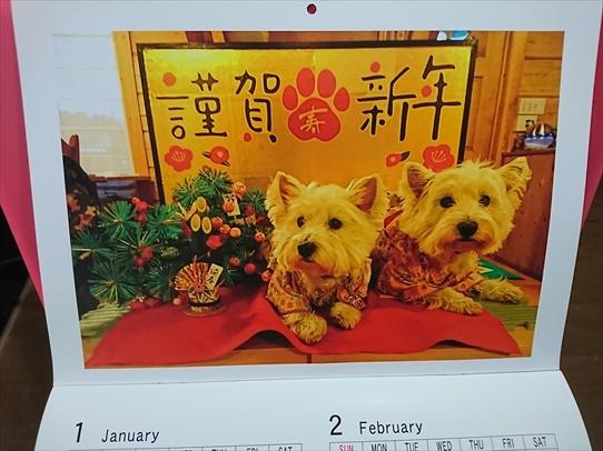 azukiai1_201901181830516c3.jpg