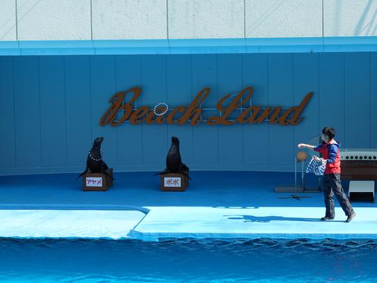 beachland39.jpg