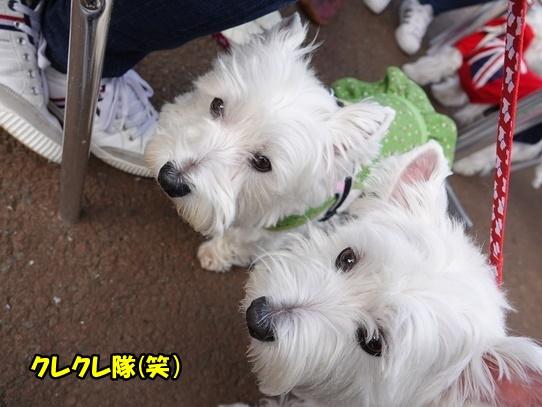 ichiyajyou12.jpg