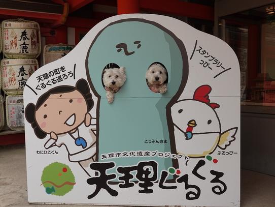 isonokamijinguu7.jpg