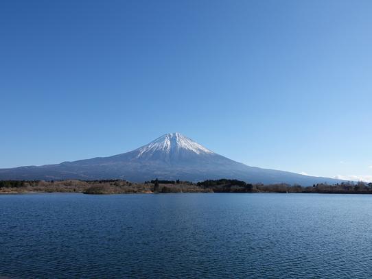 tanukiko14.jpg
