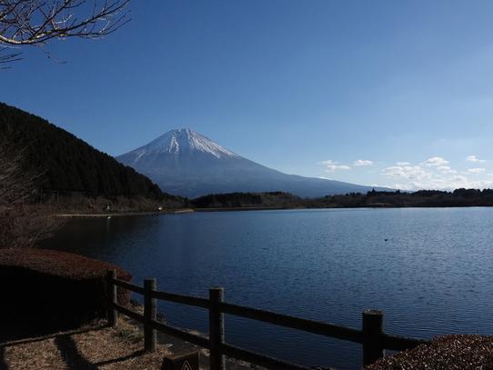 tanukiko6.jpg