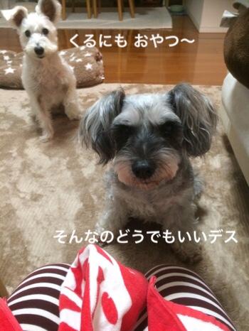 fc2blog_20181102074650de5.jpg