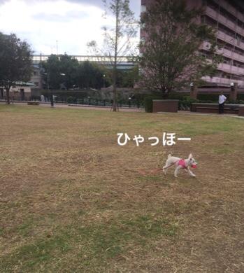 fc2blog_20181119073225310.jpg