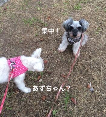 fc2blog_20181119073446ac1.jpg