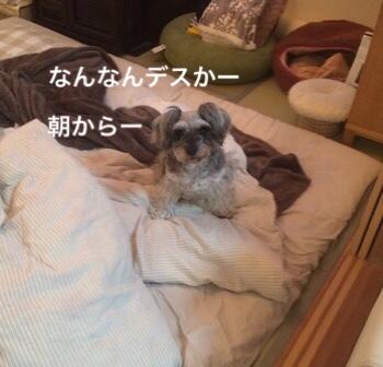 fc2blog_20181126083004c25.jpg