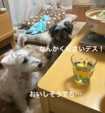 fc2blog_2018112807281222d.jpg