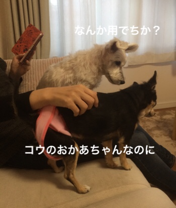 fc2blog_20181218072357707.jpg
