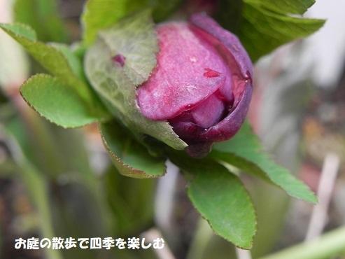 kurisumasuro-zu110.jpg
