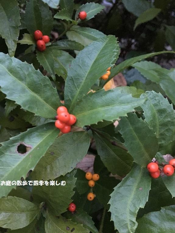 senryou18_20181119082425ed3.jpg