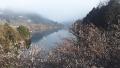190302月ケ瀬湖と湖畔の白梅