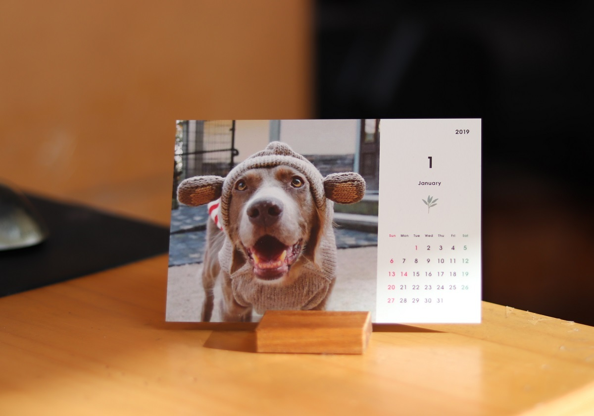 ワイマラナーロングヘアードクララ1月カレンダー