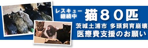 tsuchiura_banner_ss_0220.jpg
