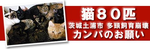 tsuchiura_banner_ss_2019020808143367d.jpg