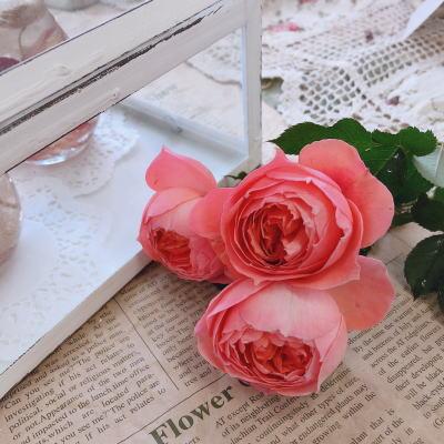 ブログ0223ロマンティックチュチュ1