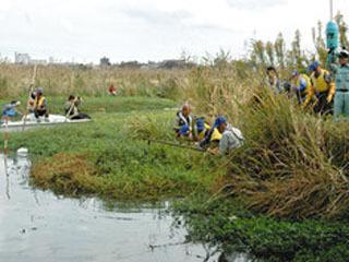 手賀沼の大津川河口部で行われた外来水草の刈り取り作業