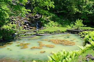 ティラピアとグッピーの根絶が宣言されたオンネトー湯の滝の湯溜まり