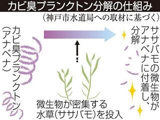 カビ臭プランクトン分解のしくみ
