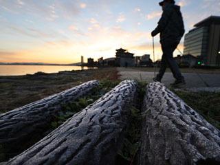 12月11日早朝は大津しなぎさ公園の湖岸でも霜が見られた