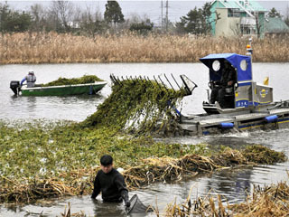 オオバナミズキンバイ駆除の新兵器 水陸両用藻刈り船