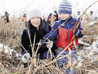 雄琴湖岸の市民ヨシ刈り