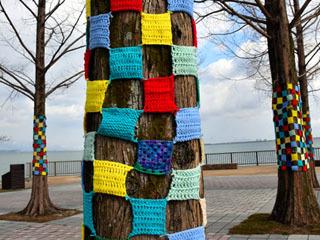 大津市なぎさ公園のメタセコイアを飾るヤーンボミング
