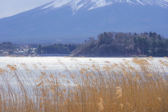 富士たまゆら2019冬_9873