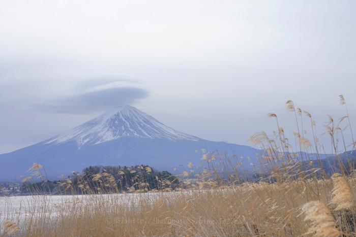富士たまゆら2019冬_9875