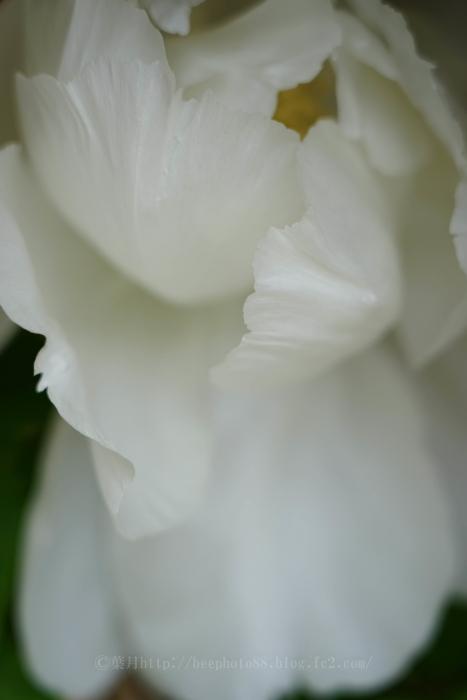 b牡丹園9678