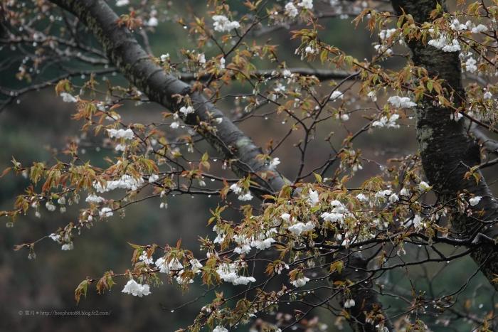 鎌倉0941