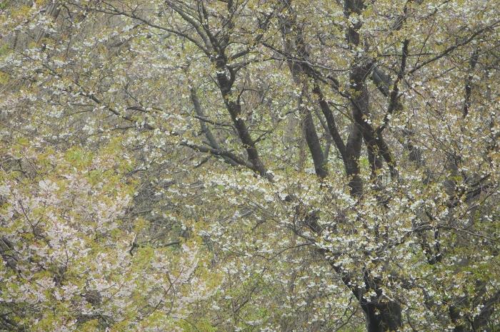 鎌倉DSC00970