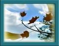 ●天然の凧