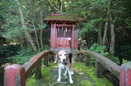 20181007中野神社26