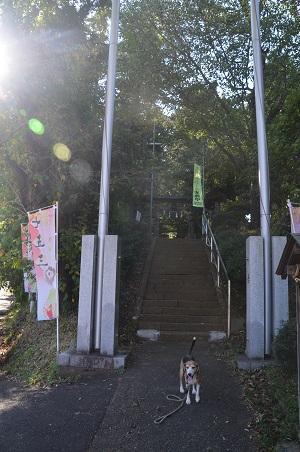 20181007金井八幡神社01