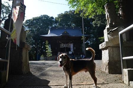 20181007金井八幡神社11