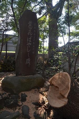 20181009葛西神社42