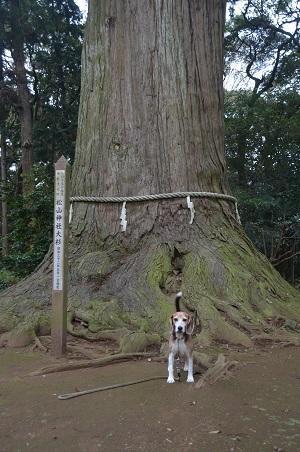 20181012松山神社13
