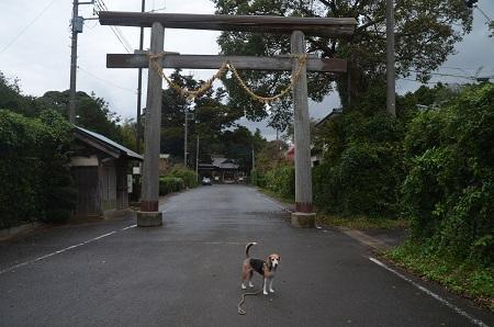 20181012松沢熊野神社04